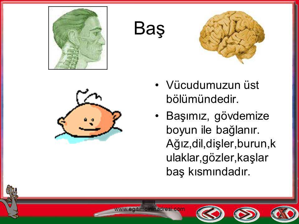 Vücudumuzun Bölümleri Baş Gövde Kollar ve bacaklar www.egitimcininadresi.com