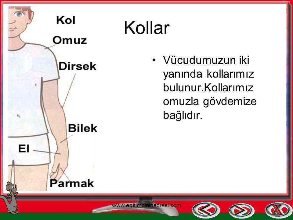 Kol ve Bacaklar –Kollar ve bacaklar hareket etmemizi sağlar. www.egitimcininadresi.com