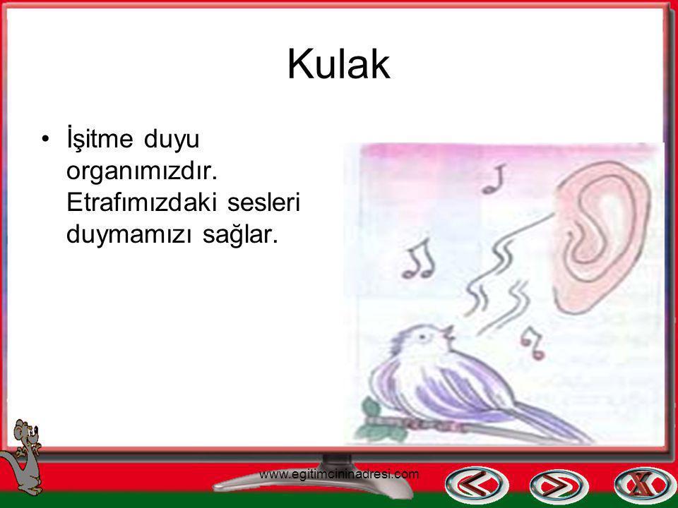 Burun Koku alma duyu organıdır. www.egitimcininadresi.com