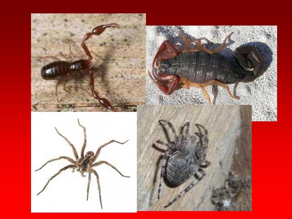 Hayvanlar Aleminin ¾'ü ve En Sosyalleri –Karıncalar - Esra Elif AYDIN