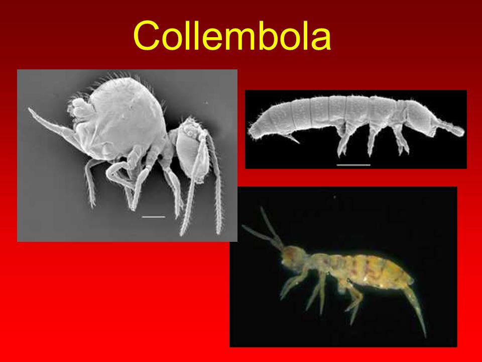B Ö C E K L E R abdomen toraks Baş Üç çift bacak Bir çift anten