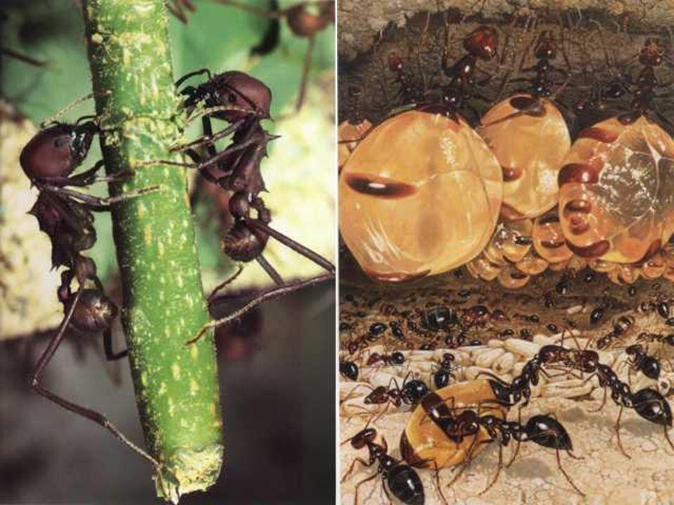 Beslenme Alışkanlıkları Değişkenlik Gösterir Bazıları karnivordur, diğer hayvanlar ile beslenir. (ölü ya da diri!) Bazıları bitkiler ile beslenir. Baz