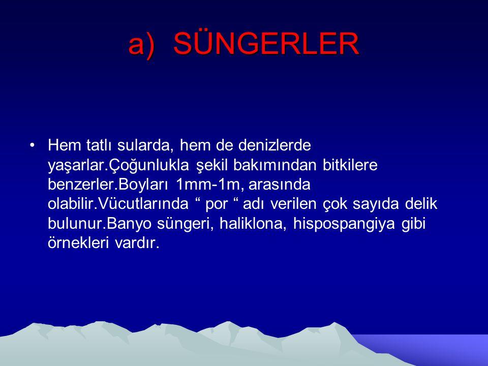 a)SÜNGERLER Hem tatlı sularda, hem de denizlerde yaşarlar.Çoğunlukla şekil bakımından bitkilere benzerler.Boyları 1mm-1m, arasında olabilir.Vücutların