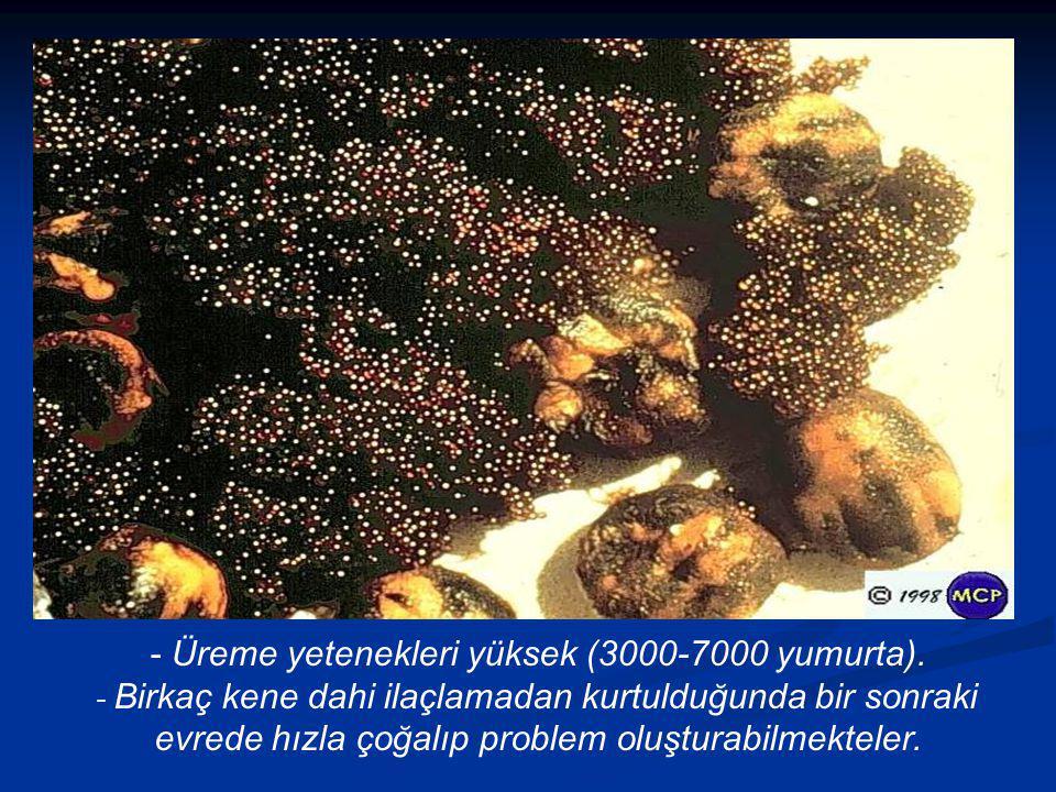 - Üreme yetenekleri yüksek (3000-7000 yumurta).