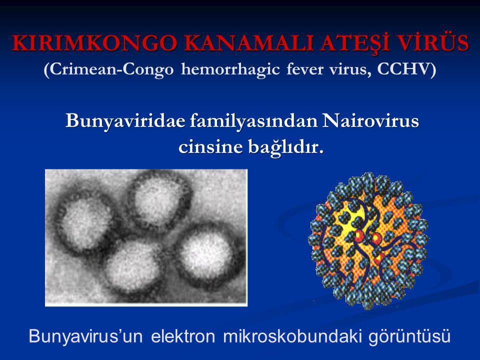 KIRIMKONGO KANAMALI ATEŞİ VİRÜS KIRIMKONGO KANAMALI ATEŞİ VİRÜS (Crimean-Congo hemorrhagic fever virus, CCHV) Bunyaviridae familyasından Nairovirus cinsine bağlıdır.