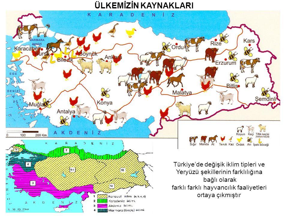 ÜLKEMİZİN KAYNAKLARI Türkiye'de değişik iklim tipleri ve Yeryüzü şekillerinin farklılığına bağlı olarak farklı farklı hayvancılık faaliyetleri ortaya