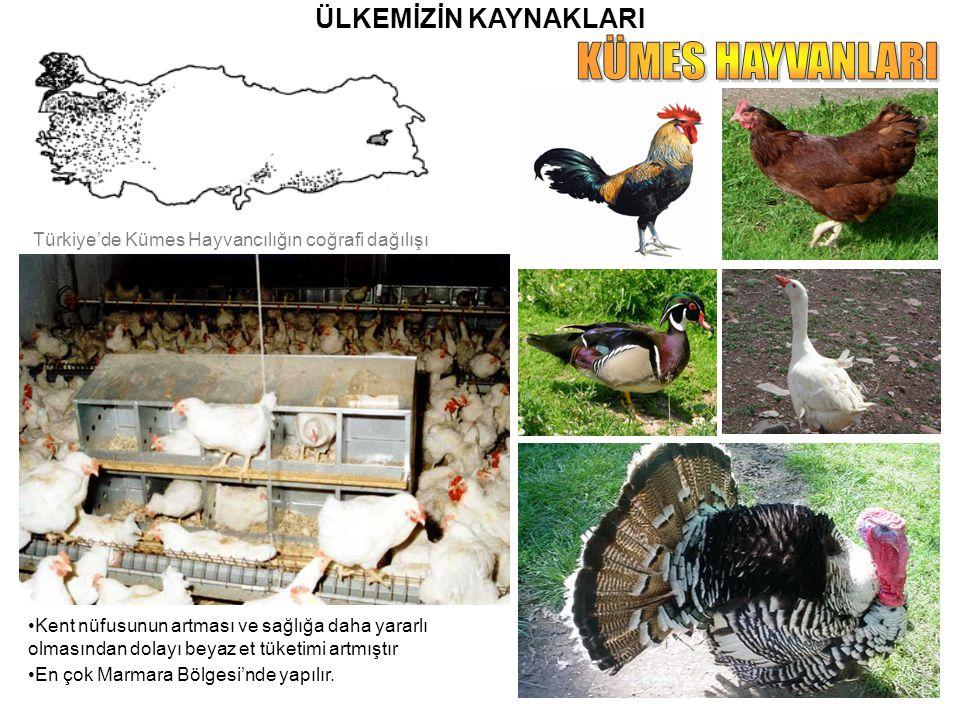 ÜLKEMİZİN KAYNAKLARI Kent nüfusunun artması ve sağlığa daha yararlı olmasından dolayı beyaz et tüketimi artmıştır En çok Marmara Bölgesi'nde yapılır.