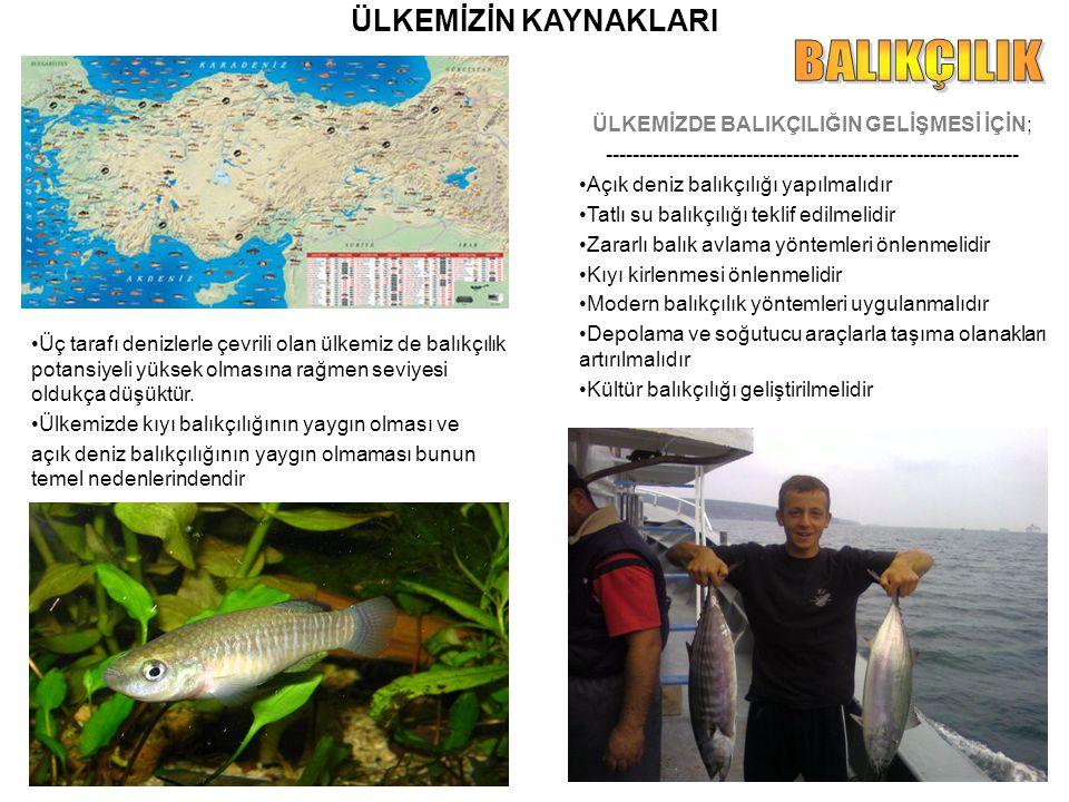 ÜLKEMİZİN KAYNAKLARI Üç tarafı denizlerle çevrili olan ülkemiz de balıkçılık potansiyeli yüksek olmasına rağmen seviyesi oldukça düşüktür. Ülkemizde k