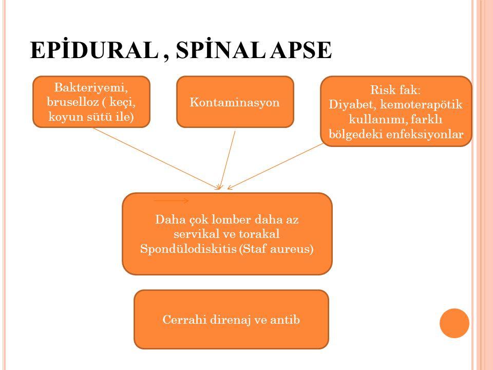 EPİDURAL, SPİNAL APSE Kontaminasyon Bakteriyemi, bruselloz ( keçi, koyun sütü ile) Daha çok lomber daha az servikal ve torakal Spondülodiskitis (Staf