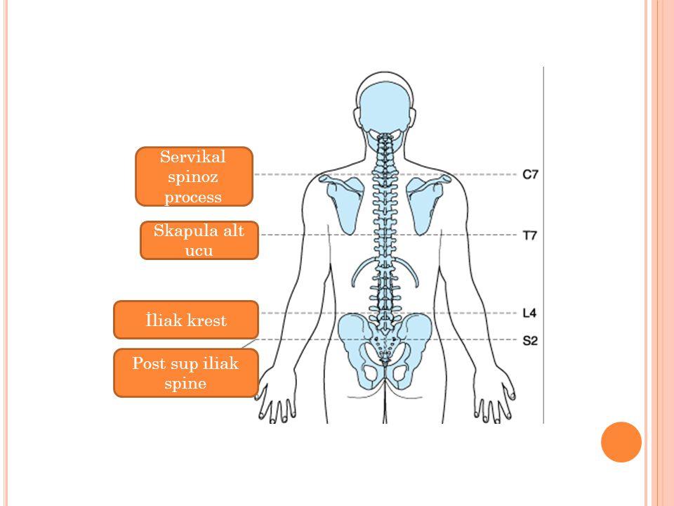Servikal spinoz process Skapula alt ucu İliak krest Post sup iliak spine