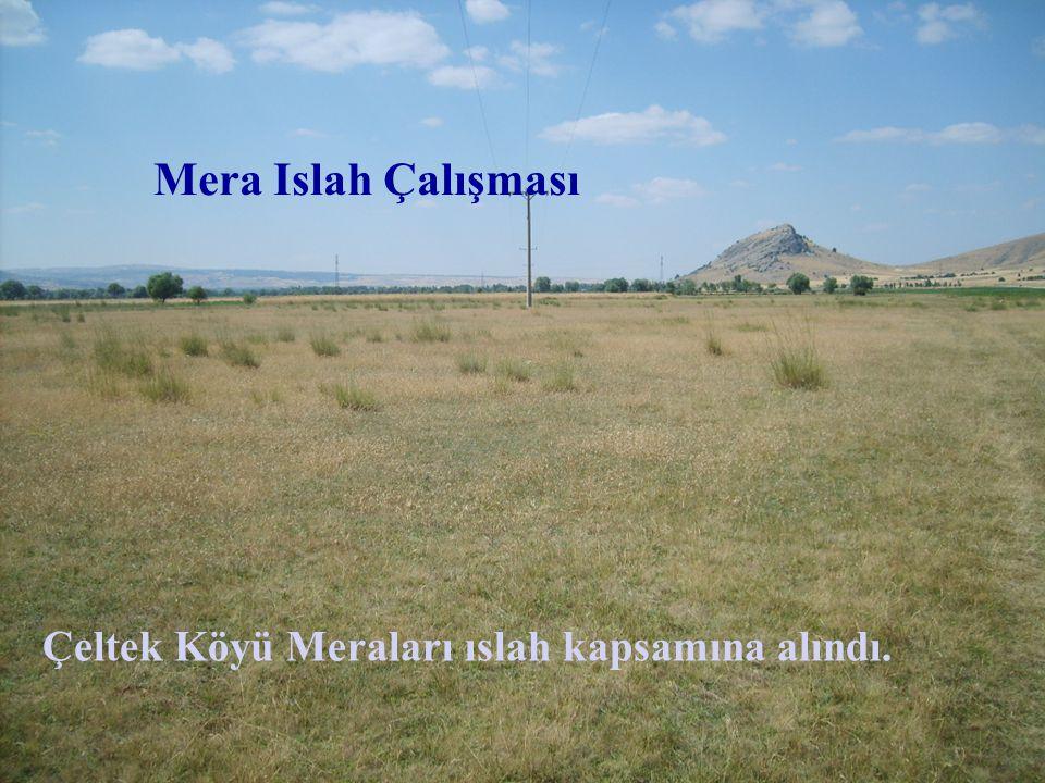 Çeltek Köyü Meraları ıslah kapsamına alındı. Mera Islah Çalışması