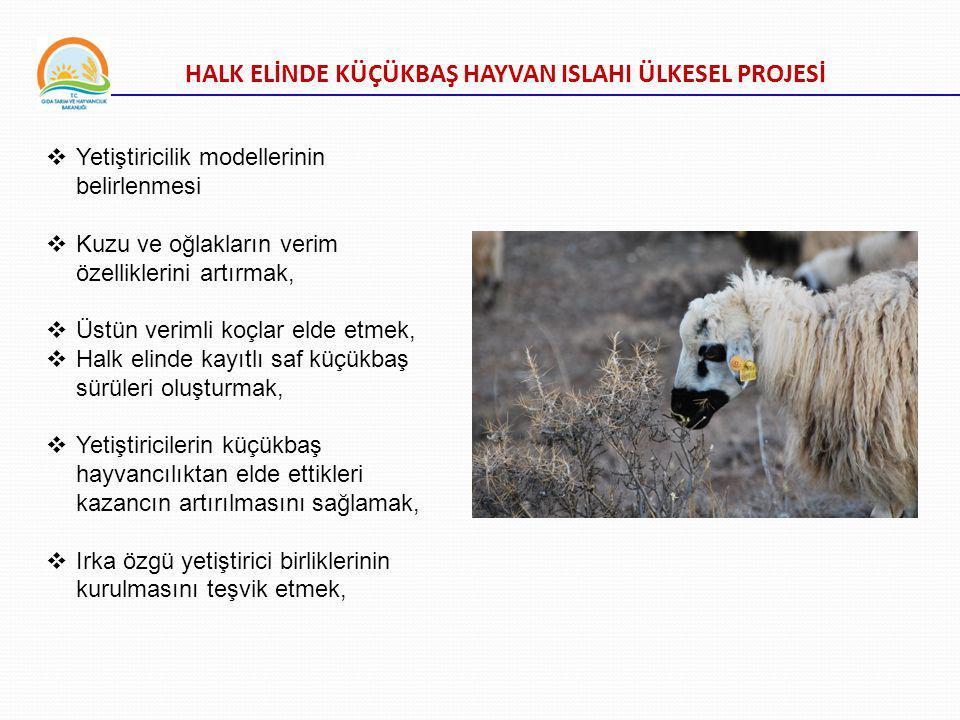 HALK ELİNDE KÜÇÜKBAŞ HAYVAN ISLAHI ÜLKESEL PROJESİ  Yetiştiricilik modellerinin belirlenmesi  Kuzu ve oğlakların verim özelliklerini artırmak,  Üstün verimli koçlar elde etmek,  Halk elinde kayıtlı saf küçükbaş sürüleri oluşturmak,  Yetiştiricilerin küçükbaş hayvancılıktan elde ettikleri kazancın artırılmasını sağlamak,  Irka özgü yetiştirici birliklerinin kurulmasını teşvik etmek,