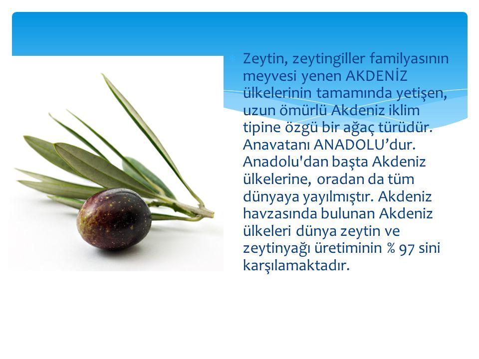  Zeytin, zeytingiller familyasının meyvesi yenen AKDENİZ ülkelerinin tamamında yetişen, uzun ömürlü Akdeniz iklim tipine özgü bir ağaç türüdür.