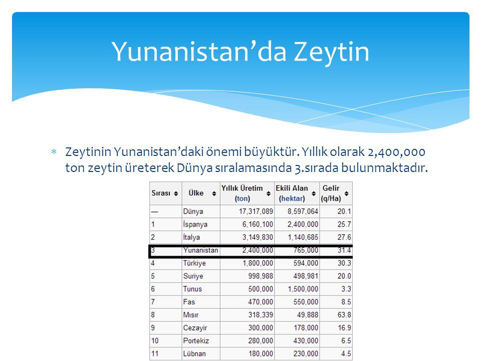  Zeytinin Yunanistan'daki önemi büyüktür.