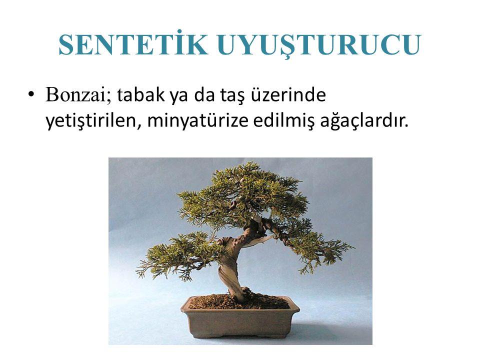 Bonzai; t abak ya da taş üzerinde yetiştirilen, minyatürize edilmiş ağaçlardır. SENTETİK UYUŞTURUCU