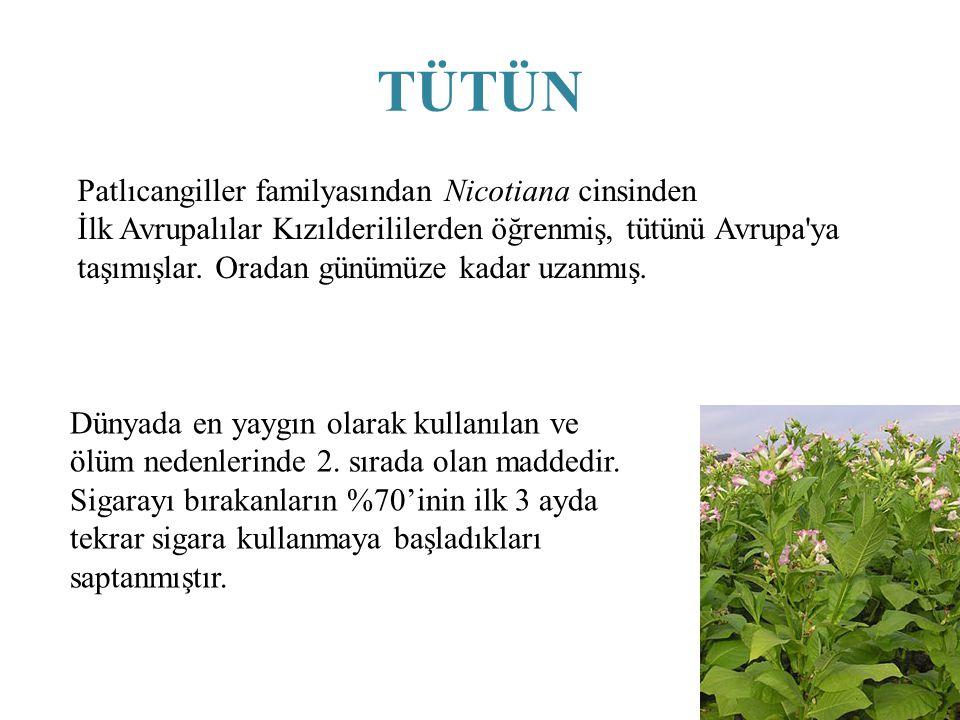 TÜTÜN Patlıcangiller familyasından Nicotiana cinsinden İlk Avrupalılar Kızılderililerden öğrenmiş, tütünü Avrupa'ya taşımışlar. Oradan günümüze kadar