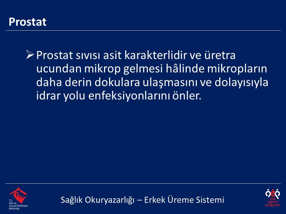 Prostat Sağlık Okuryazarlığı – Erkek Üreme Sistemi  Prostat sıvısı asit karakterlidir ve üretra ucundan mikrop gelmesi hâlinde mikropların daha derin dokulara ulaşmasını ve dolayısıyla idrar yolu enfeksiyonlarını önler.