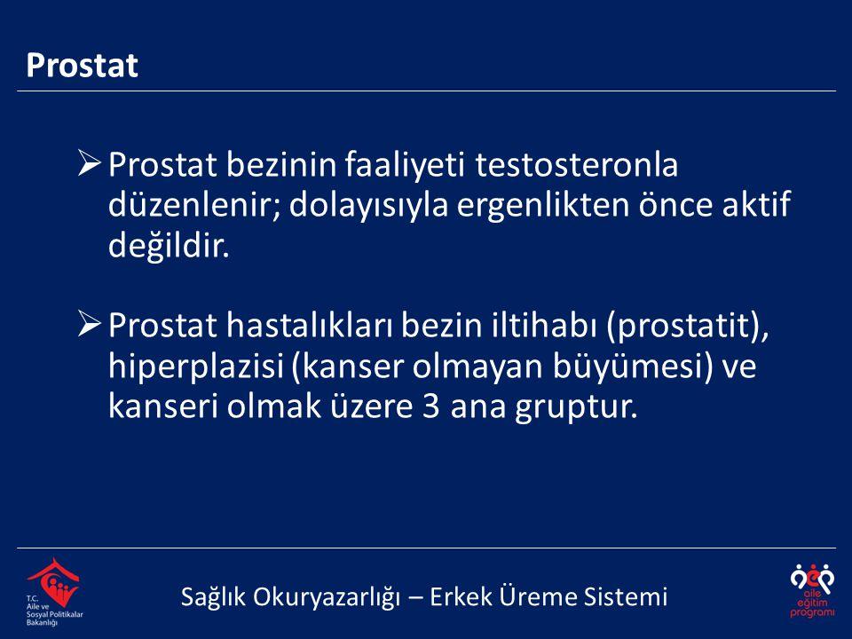 Prostat Sağlık Okuryazarlığı – Erkek Üreme Sistemi  Prostat bezinin faaliyeti testosteronla düzenlenir; dolayısıyla ergenlikten önce aktif değildir.