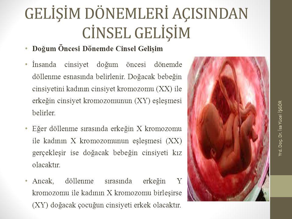 Doğum Öncesi Dönemde Cinsel Gelişim İnsanda cinsiyet doğum öncesi dönemde döllenme esnasında belirlenir. Doğacak bebeğin cinsiyetini kadının cinsiyet