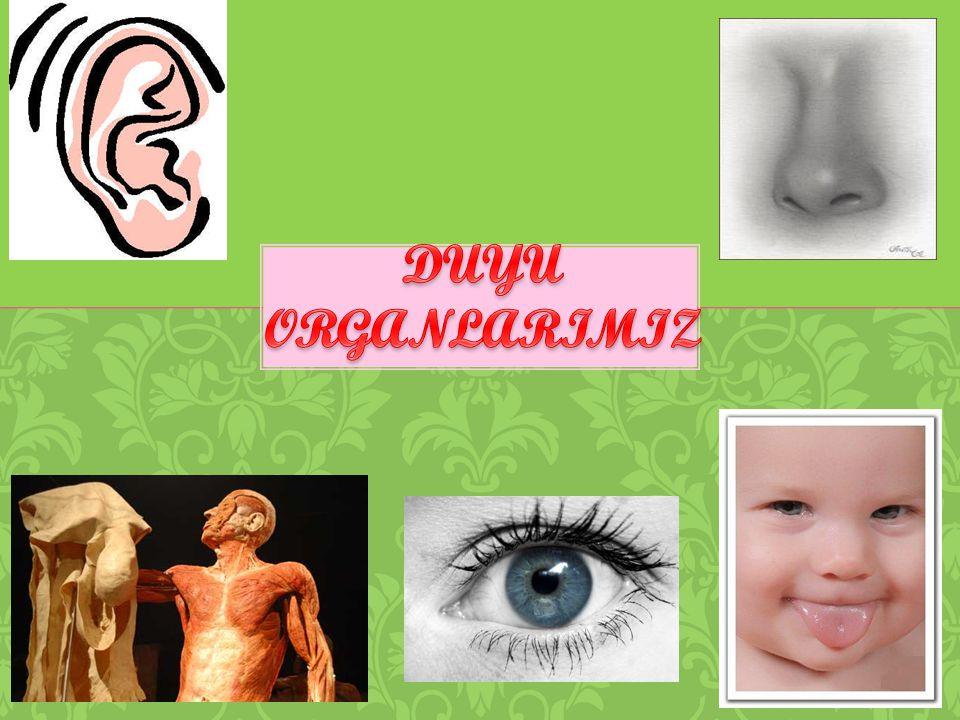 7) İşitme duyu organımız …………..'dır.A) kulakB) burun C) göz 8) Yandaki görselin görevi nedir.