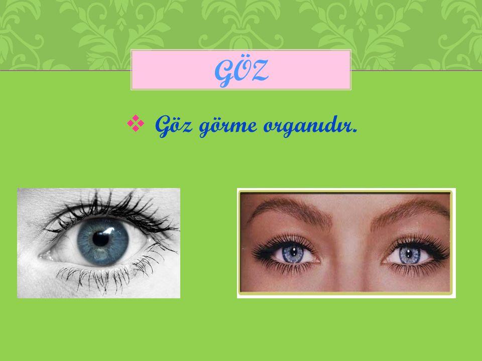  Göz görme organıdır. GÖZ