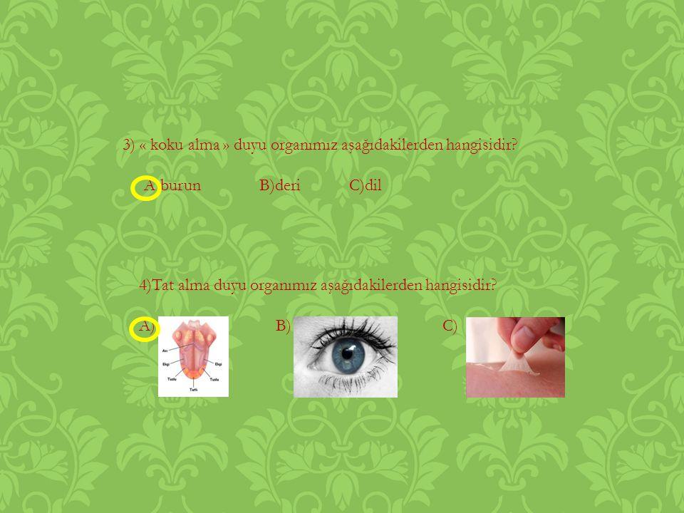 3) « koku alma » duyu organımız aşağıdakilerden hangisidir.