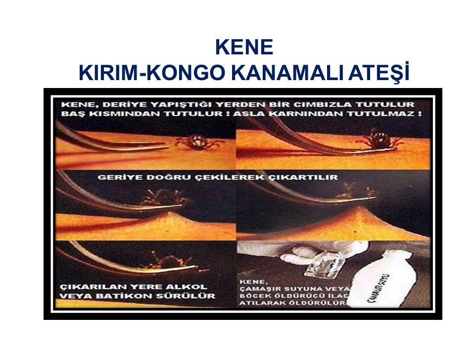 KENE KIRIM-KONGO KANAMALI ATEŞİ