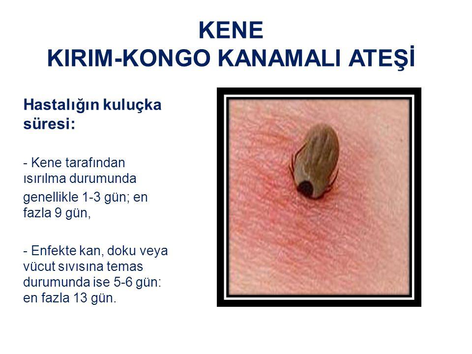 KENE KIRIM-KONGO KANAMALI ATEŞİ Hastalığın kuluçka süresi: - Kene tarafından ısırılma durumunda genellikle 1-3 gün; en fazla 9 gün, - Enfekte kan, doku veya vücut sıvısına temas durumunda ise 5-6 gün: en fazla 13 gün.