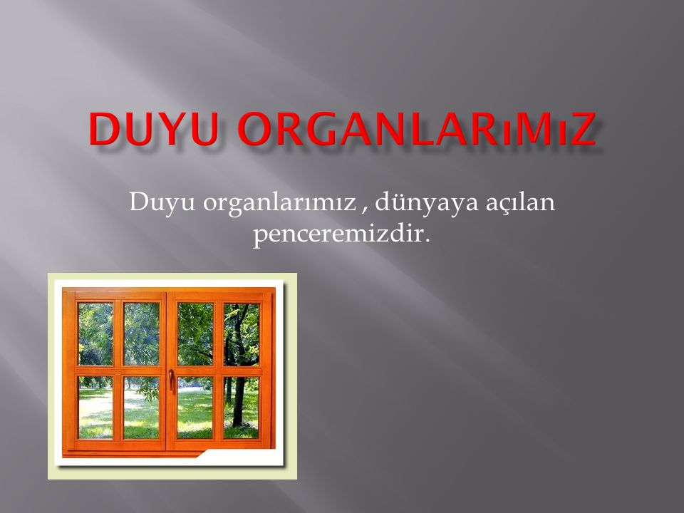 Duyu organlarımız, dünyaya açılan penceremizdir.