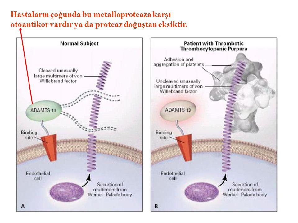 TTP PATOGENEZİ Katabolize edilemeyen çok yüksek mol ağırlıklı vWF molekülleri...