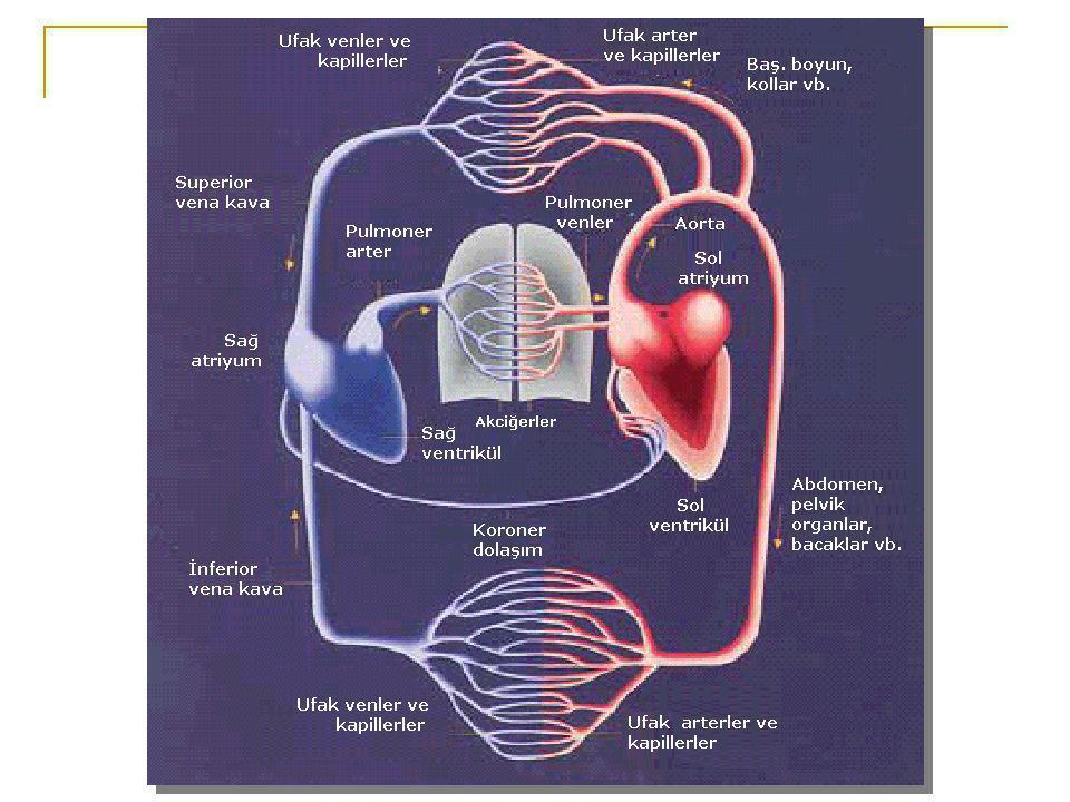 KARDİYAK SİKLÜS Kalp hızı=75 /dk  Atriyal kontraksiyon = 0.1 sn  Ventriküler kontraksiyon = 0.3 sn  Relaksasyon = 0.4 sn