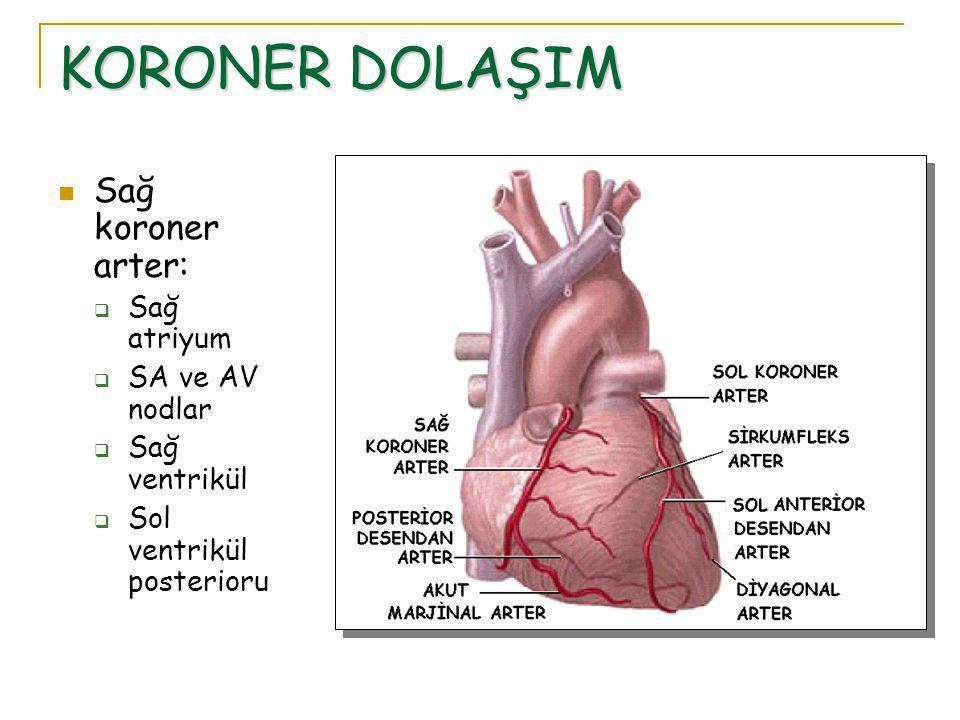 KORONER DOLAŞIM Sağ koroner arter:  Sağ atriyum  SA ve AV nodlar  Sağ ventrikül  Sol ventrikül posterioru
