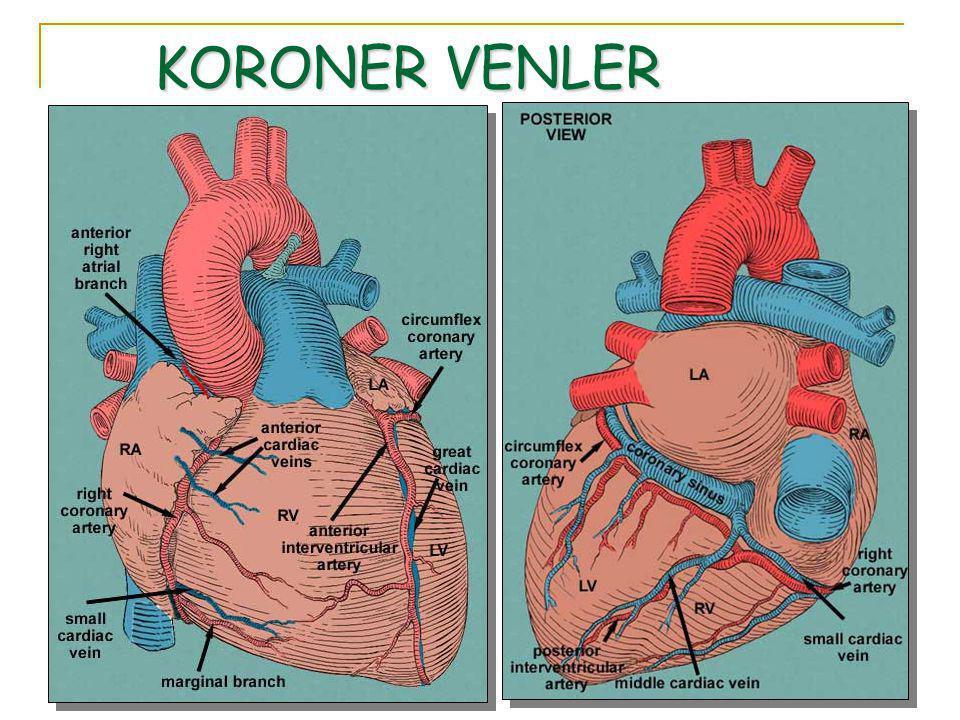 KORONER VENLER
