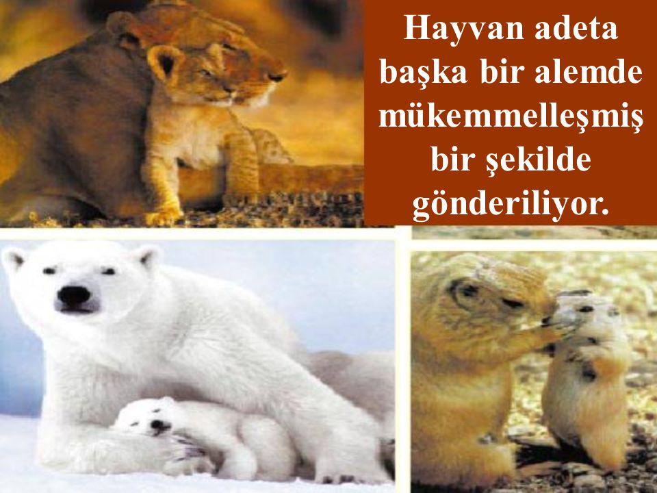 İnsan ve Hayvanın Dünyaya Yaratılışça Farklı Gelişleri Neyi Gösteriyor?