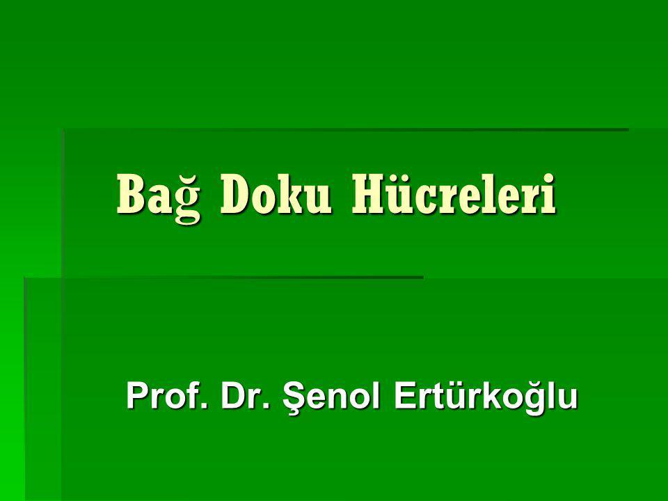 Ba ğ Doku Hücreleri Ba ğ Doku Hücreleri Prof. Dr. Şenol Ertürkoğlu