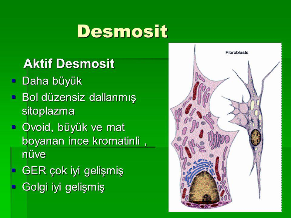 Desmosit Desmosit Aktif Desmosit Aktif Desmosit  Daha büyük  Bol düzensiz dallanmış sitoplazma  Ovoid, büyük ve mat boyanan ince kromatinli, nüve  GER çok iyi gelişmiş  Golgi iyi gelişmiş