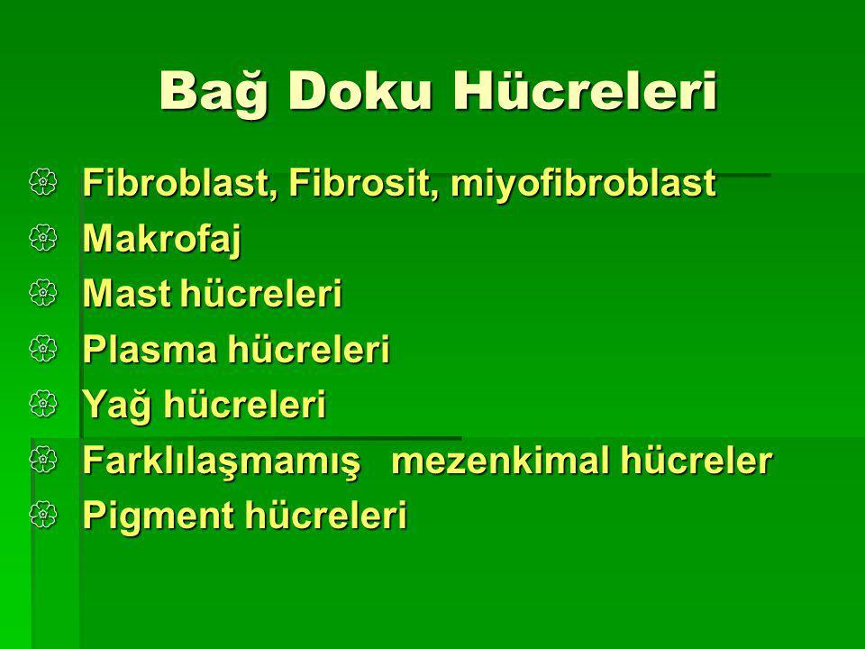 Bağ Doku Hücreleri Bağ Doku Hücreleri  Fibroblast, Fibrosit, miyofibroblast  Makrofaj  Mast hücreleri  Plasma hücreleri  Yağ hücreleri  Farklılaşmamış mezenkimal hücreler  Pigment hücreleri