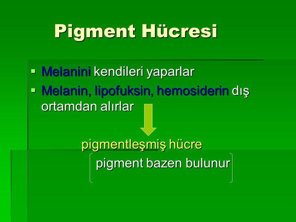 Pigment Hücresi Pigment Hücresi  Melanini kendileri yaparlar  Melanin, lipofuksin, hemosiderin dış ortamdan alırlar pigmentleşmiş hücre pigmentleşmiş hücre pigment bazen bulunur pigment bazen bulunur