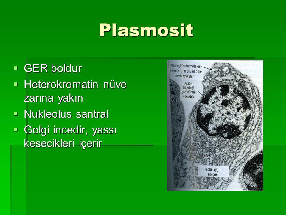 Plasmosit Plasmosit  GER boldur  Heterokromatin nüve zarına yakın  Nukleolus santral  Golgi incedir, yassı kesecikleri içerir