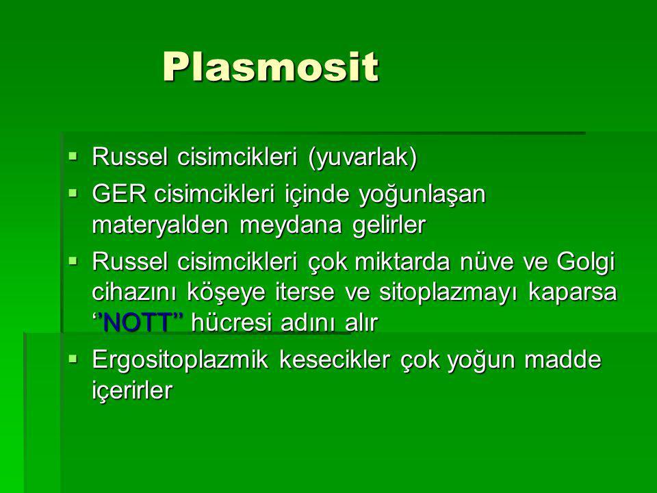 Plasmosit Plasmosit  Russel cisimcikleri (yuvarlak)  GER cisimcikleri içinde yoğunlaşan materyalden meydana gelirler  Russel cisimcikleri çok miktarda nüve ve Golgi cihazını köşeye iterse ve sitoplazmayı kaparsa ''NOTT'' hücresi adını alır  Ergositoplazmik kesecikler çok yoğun madde içerirler