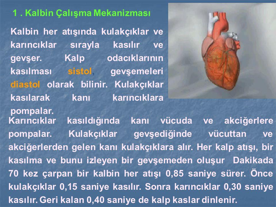 1. Kalbin Çalışma Mekanizması Kalbin her atışında kulakçıklar ve karıncıklar sırayla kasılır ve gevşer. Kalp odacıklarının kasılması sistol, gevşemele
