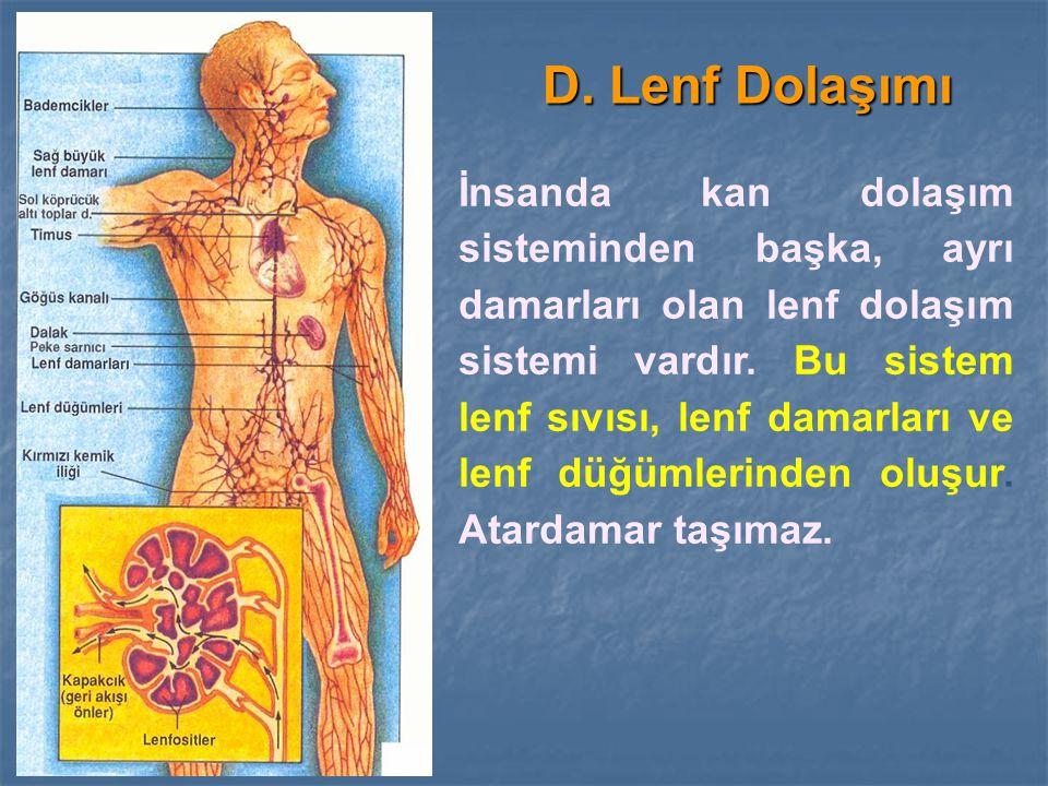 D. Lenf Dolaşımı İnsanda kan dolaşım sisteminden başka, ayrı damarları olan lenf dolaşım sistemi vardır. Bu sistem lenf sıvısı, lenf damarları ve lenf