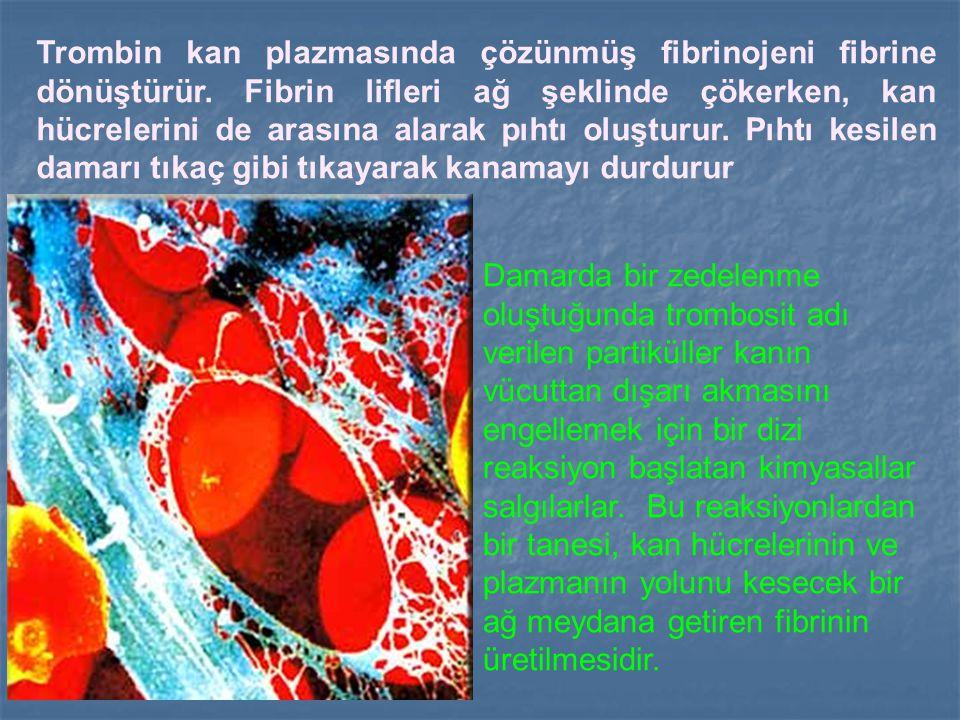 Damarda bir zedelenme oluştuğunda trombosit adı verilen partiküller kanın vücuttan dışarı akmasını engellemek için bir dizi reaksiyon başlatan kimyasa