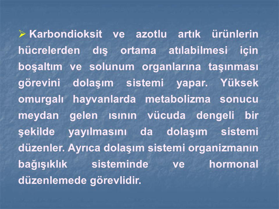  Karbondioksit ve azotlu artık ürünlerin hücrelerden dış ortama atılabilmesi için boşaltım ve solunum organlarına taşınması görevini dolaşım sistemi