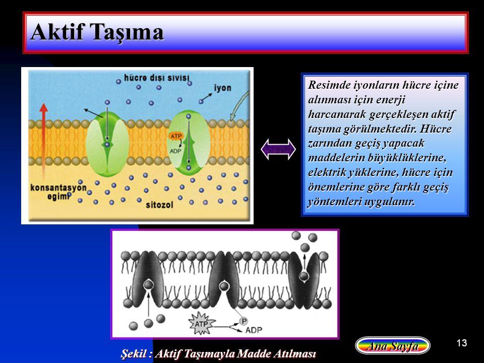 13 Aktif Taşıma Resimde iyonların hücre içine alınması için enerji harcanarak gerçekleşen aktif taşıma görülmektedir. Hücre zarından geçiş yapacak mad