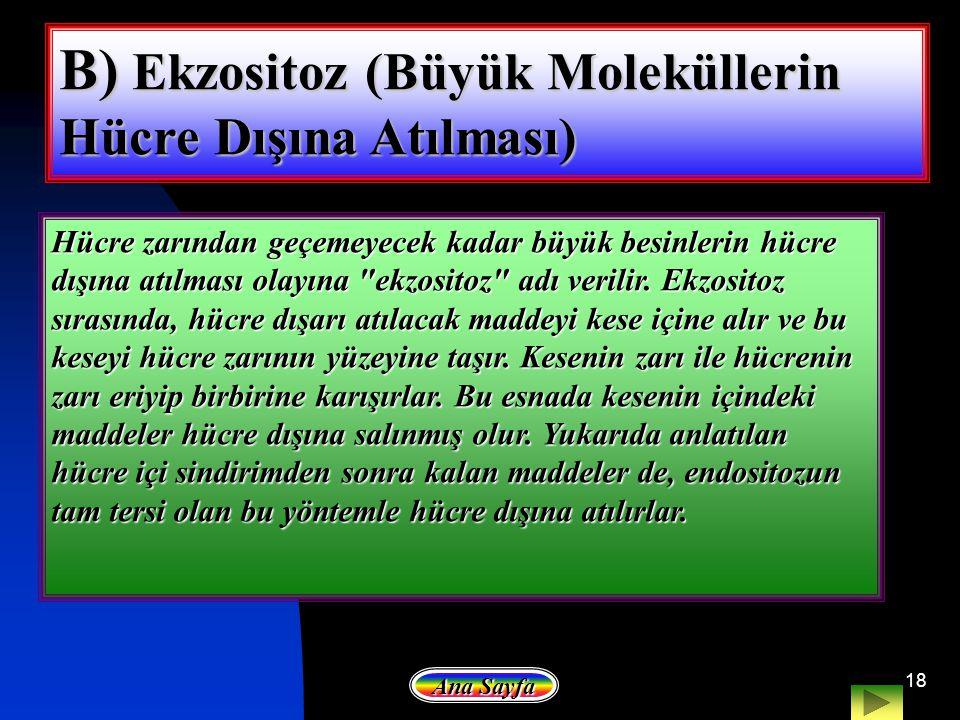 18 B) Ekzositoz (Büyük Moleküllerin Hücre Dışına Atılması) Hücre zarından geçemeyecek kadar büyük besinlerin hücre dışına atılması olayına