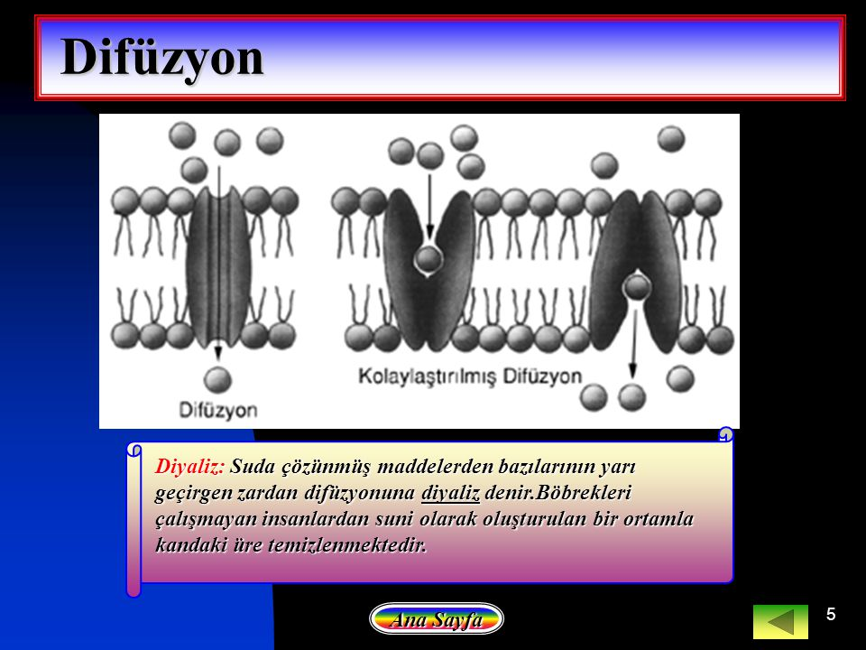 5 Diyaliz: Suda çözünmüş maddelerden bazılarının yarı geçirgen zardan difüzyonuna diyaliz denir.Böbrekleri çalışmayan insanlardan suni olarak oluşturu