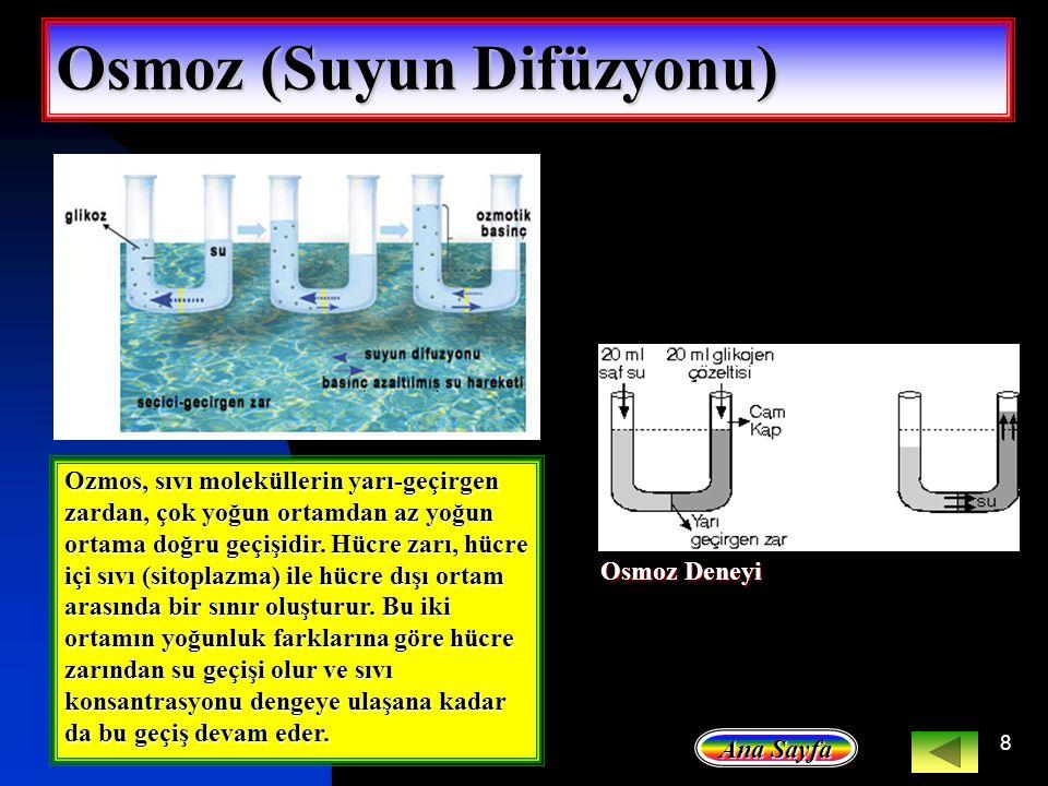 8 Osmoz (Suyun Difüzyonu) Ozmos, sıvı moleküllerin yarı-geçirgen zardan, çok yoğun ortamdan az yoğun ortama doğru geçişidir. Hücre zarı, hücre içi sıv