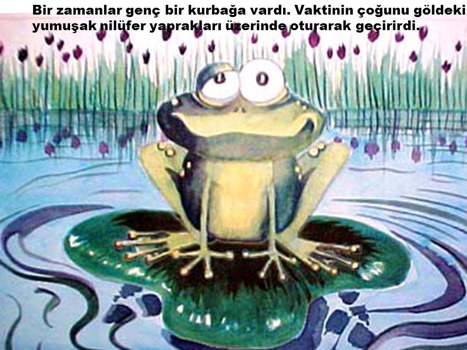 Bir zamanlar genç bir kurbağa vardı. Vaktinin çoğunu göldeki yumuşak nilüfer yaprakları üzerinde oturarak geçirirdi.