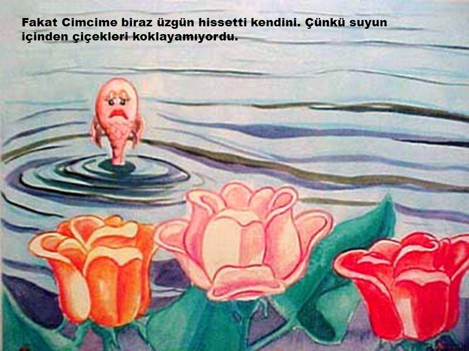 Fakat Cimcime biraz üzgün hissetti kendini. Çünkü suyun içinden çiçekleri koklayamıyordu.